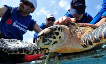 Sea Turtle Conservation in Mexico