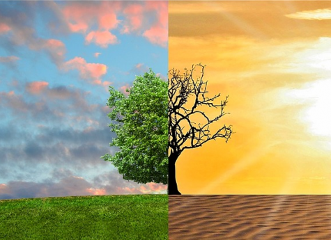 Nations and Corporations can Address Climate Change by Transferring Weather Risks to Investors