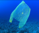 Club Expats Challenge: No Plastic Bags in November